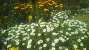 白い花・オレンジ色の花