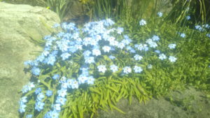 初島 水色の花 小サイズ