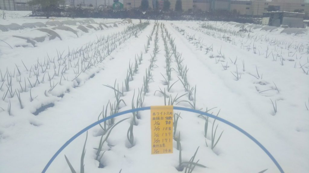 雪の中のホワイト六片
